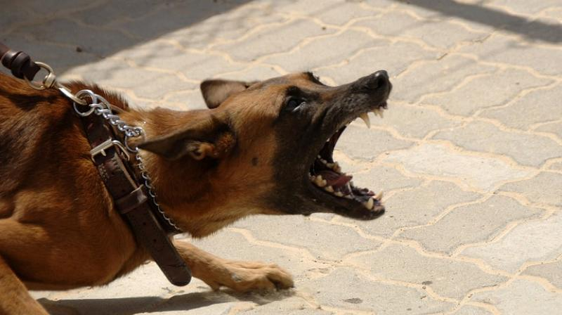 The three youngsters, all under the age of 12 were killed by packs of dogs in separate attacks on Tuesday. (Photo: Pixabay)