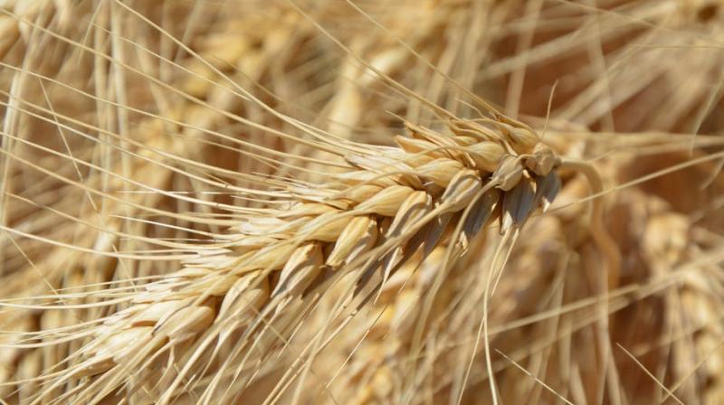 Crops. (Photo: Pexels)
