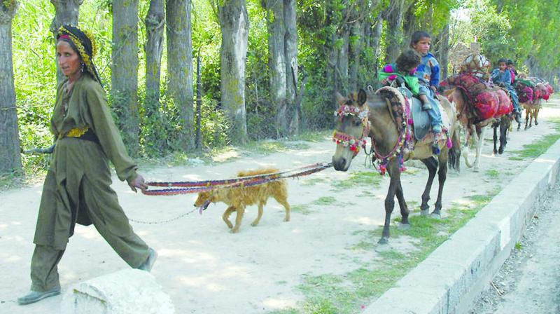 A nomadic family travels in search of a new base in Jammu and Kashmir. (Photo: H.U. Naqash)