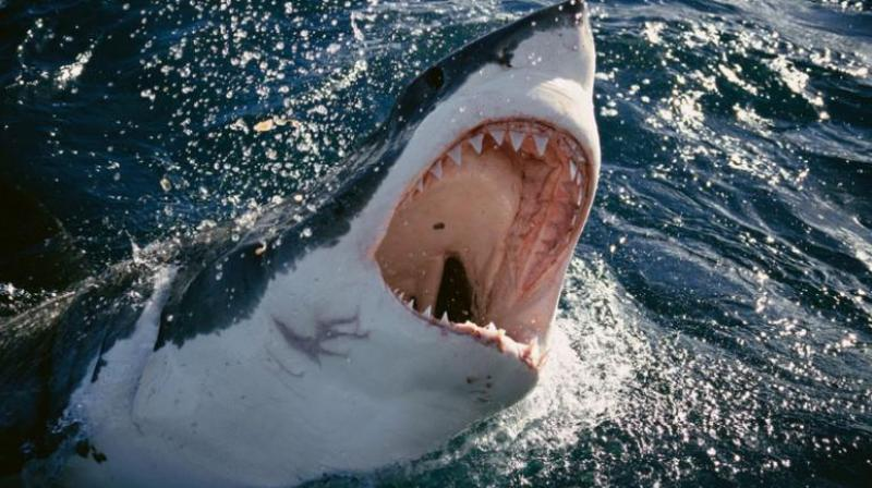 He was swimming near an area marked with warnings of shark attacks (Photo: AFP)