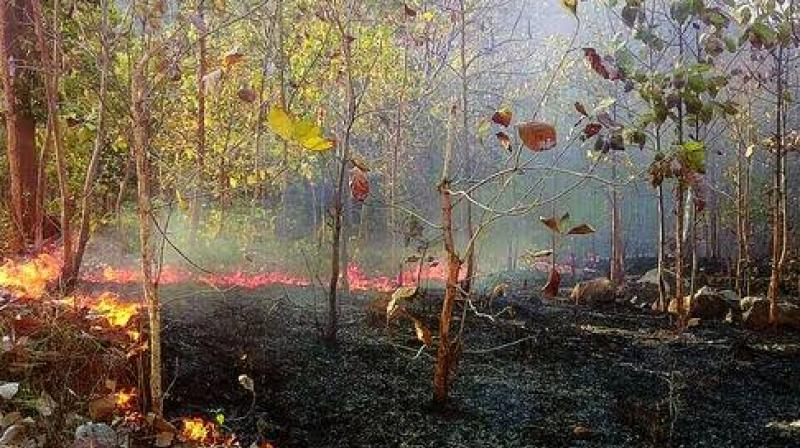 While the government is yet to ascertain the cause of the blaze, local people said that forest fire is an annual phenomenon in Similipal but the intensity is high this year. (Twitter/@nv_odisha)