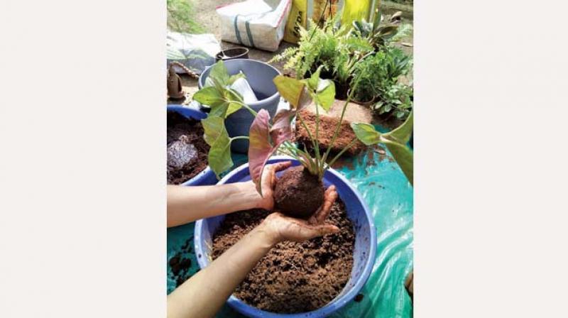 Creating the soil ball