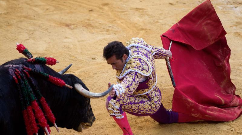Spaniards celebrate ancient sport bullfighting. (Photo: AFP)