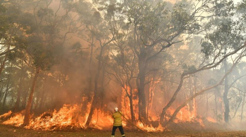 The hot weather is drifting across the country's arid centre toward the east. Parts of New South Wales are forecast to reach the mid-40s celsius. (Photo: AFP)