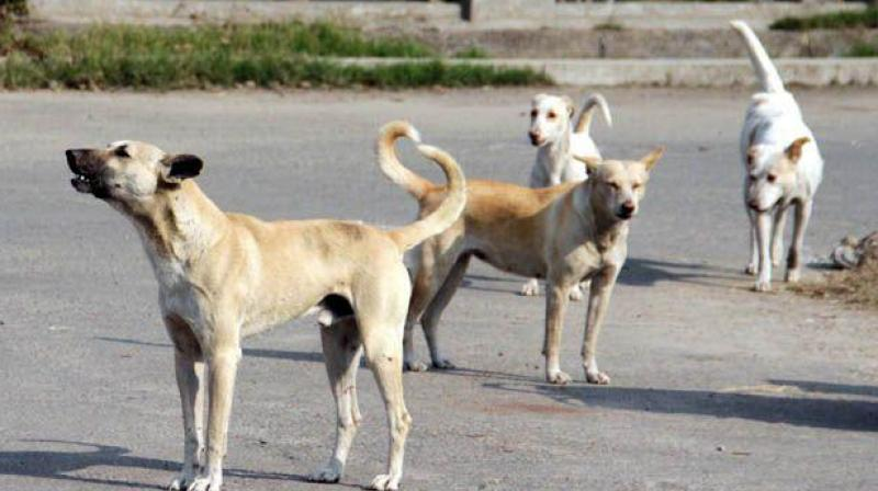 Homeless animals typically face cruelty or even extermination on the streets of the city. (Photo: Representational Image/ PTI)