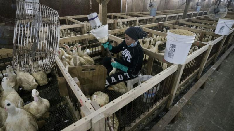 The production of foie gras is banned in several countries, including Britain. (Photo: AFP)