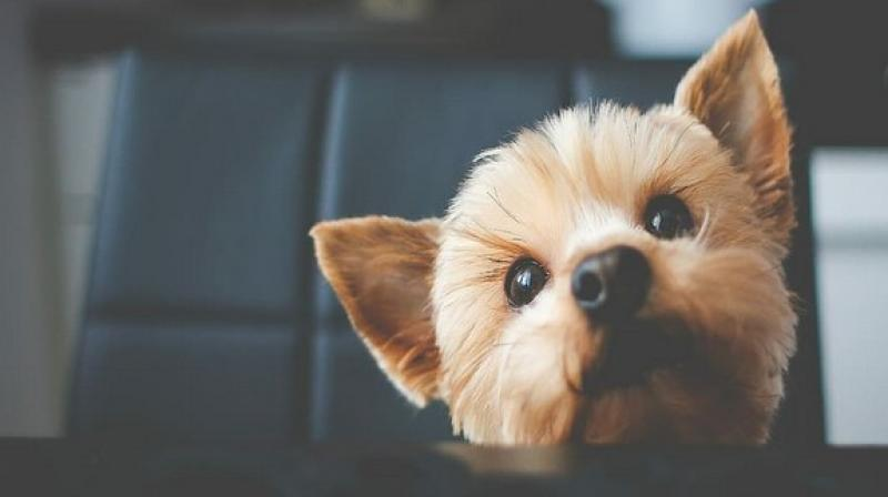 The task might seem strenuous but small steps and cautions can save your pets from the stress. (Photo: ANI)