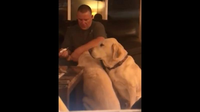 Viewers first see the first dog sitting as her owner, puts medicine into her ear and massages it in.
