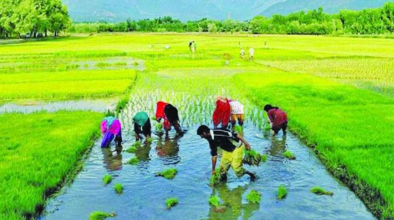 Besides, farmers have also alleged that the government has not even collected 25 per cent of paddy during the current Rabi season so far.