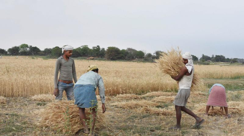Farmers harvest wheat crop in a field amid the nationwide COVID-19 lockdown, in Patna. PTI photo