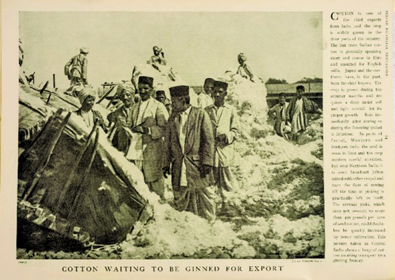 Cotton waiting to be ginned for export, print, Indian Pictorial Education, 1930All photos: Dr Bhau Daji Lad Museum