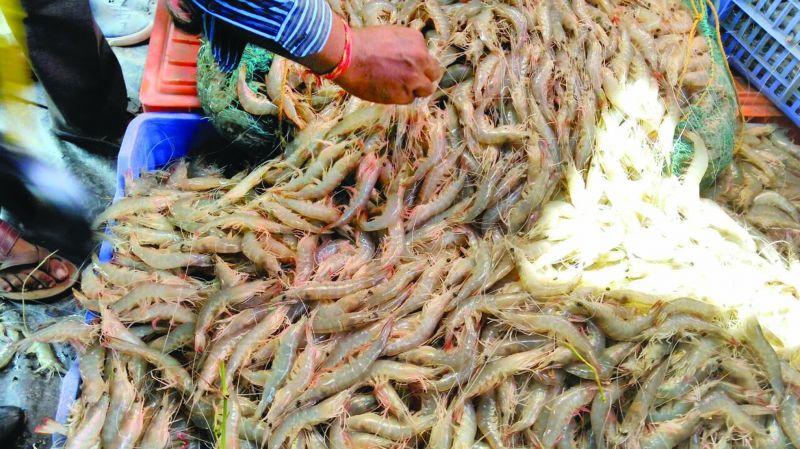 Native species of shrimp caught in Balasore.