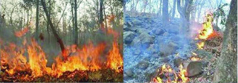 Forest fires in Odisha's Dandakaranya region.