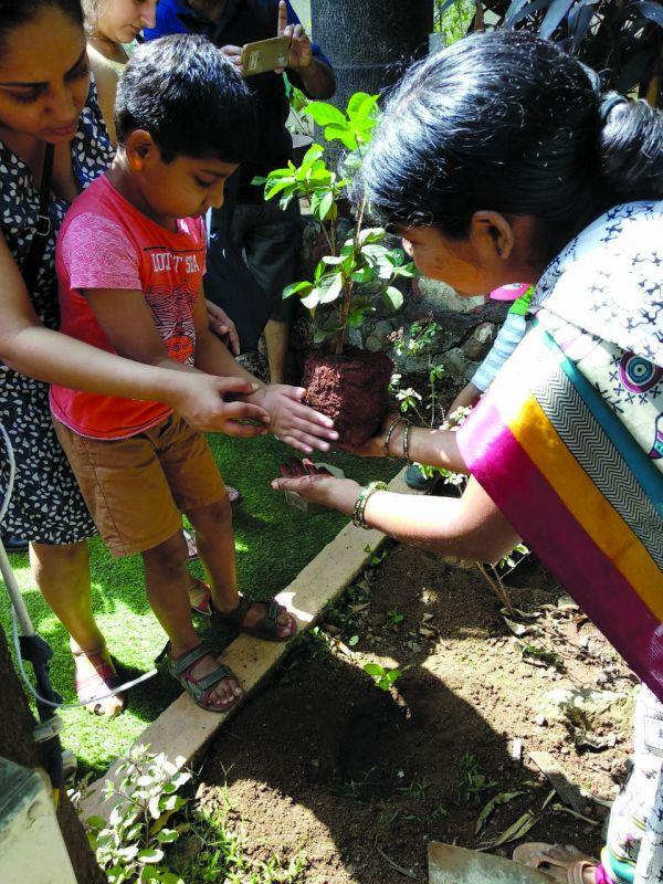 A child plants a tree