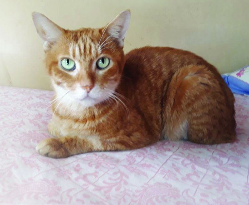 Mao, who was suffering from chronic kidney disease, was taken to a Reiki healer.