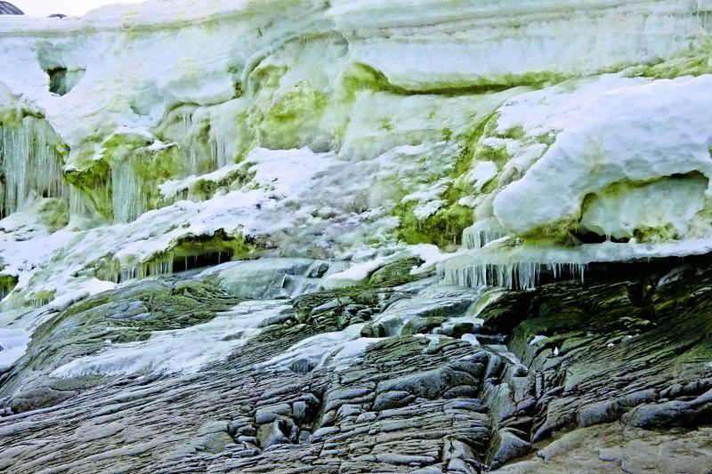 Algae and ice