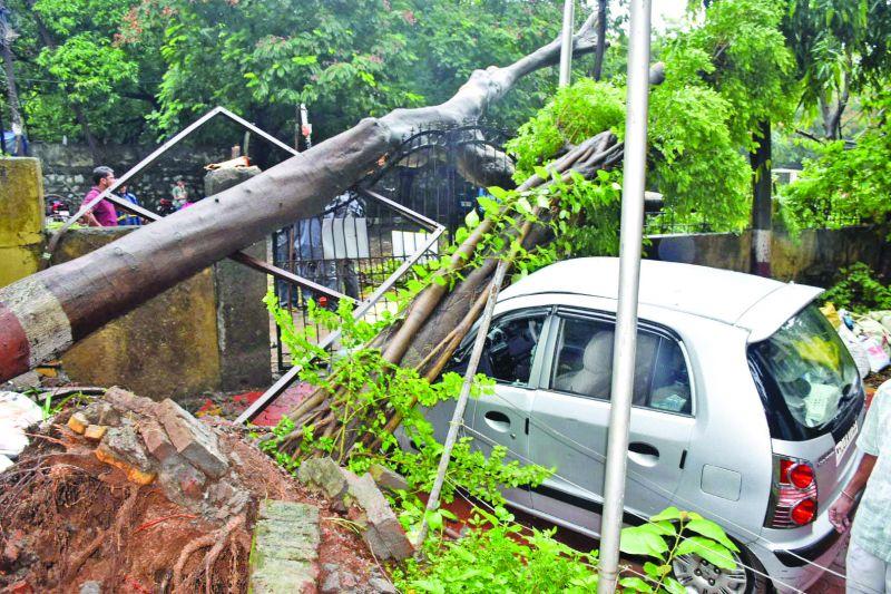 Tree falls on a car in Thane (Photo: Deepak Kurkunde)