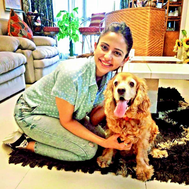 Actor Rakul Preet with her pet.