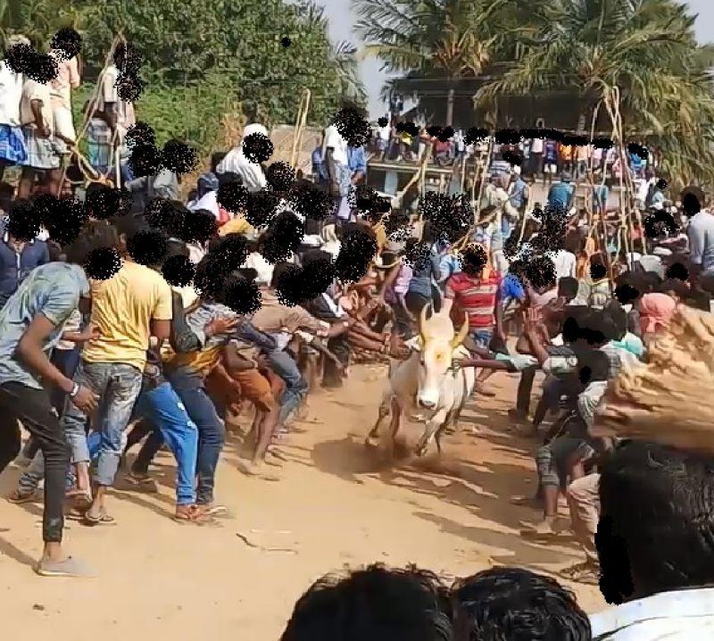 Fleeing bull whacked by mob in Periya Suriyur Jallikattu.