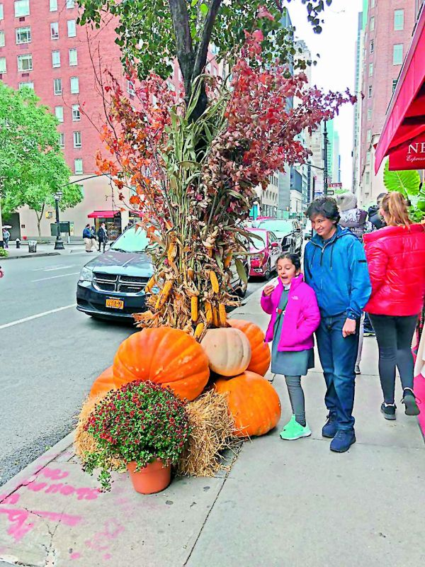 Mahesh Babu and Namrata's kids Gautham and Sitara seemed amazed with the huge pumpkins on display on a roadside during Halloween celebrations in US as they enjoy their vacation amidst all the festivity.