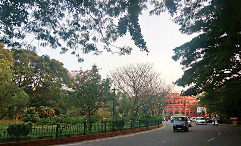 Eco-watch: Greening the urban jungle