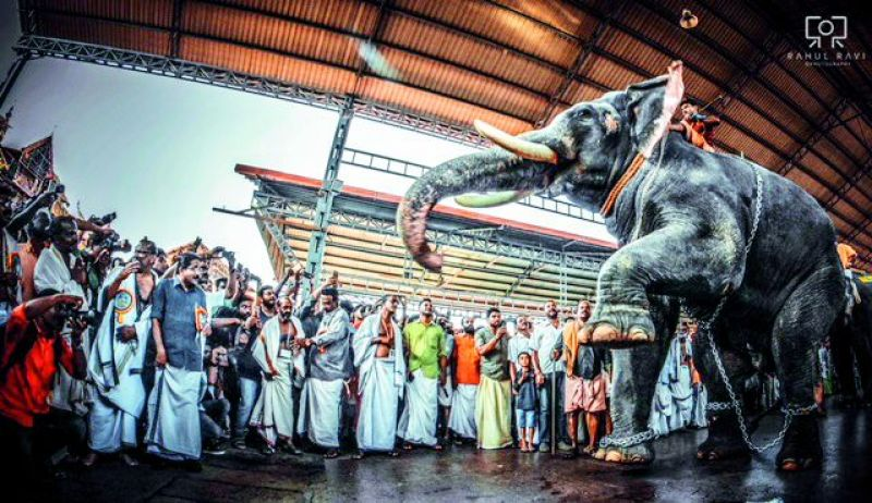 Guruvayoor Sidharthan bows before the main deity after winning Aanayottam, an elephant race. The idol of the deity is placed on the winner during the festival.