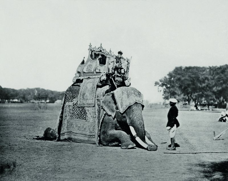 Delhi, His Eminence, The Viceroy's Elephant, Delhi Durbar.