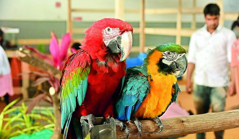 Parrots at the expo