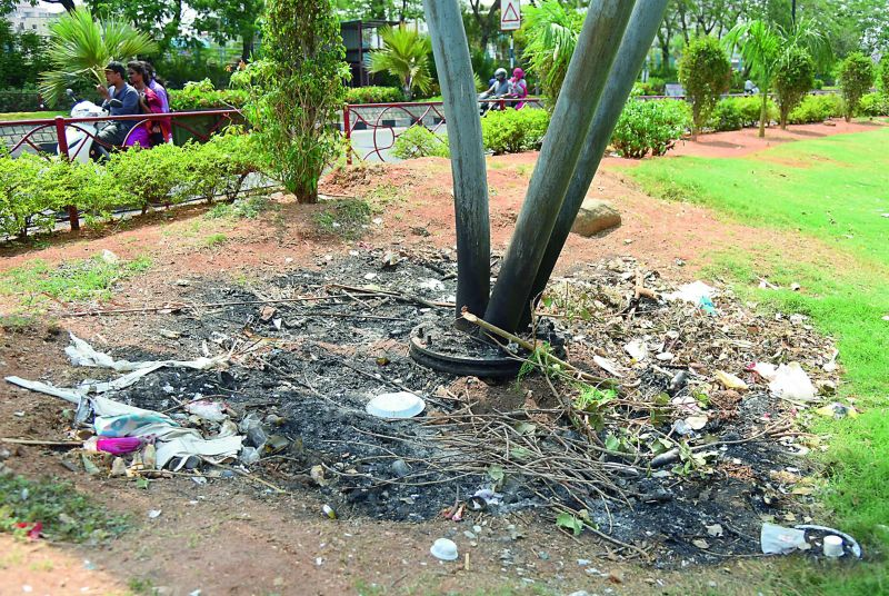 Is common along the lawns which is a popular haunt for families who visit in the evening and nights. The area is cleaned in the mornings but dirtied by visitors unmindful of hygiene and cleanliness.
