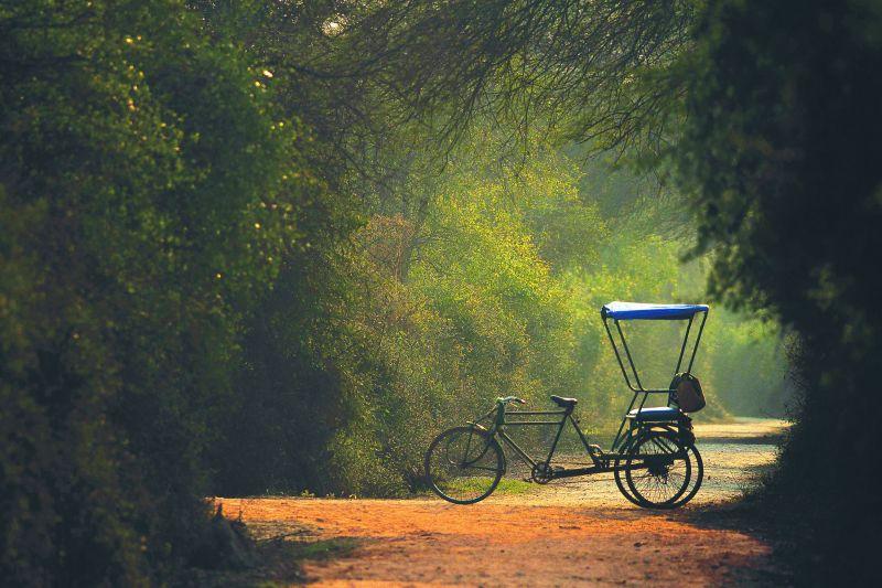 A rickshaw framed in foliage at the Bharatpur Bird Sanctuary