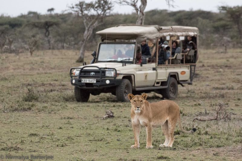 Private Conservancies allow vehicles to go off road to get close to the wildlife