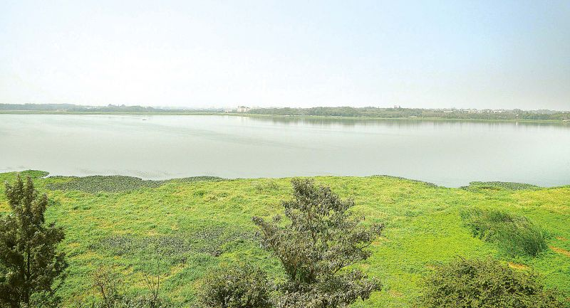 Bellandur Lake on Friday, the day after a major fire broke out (Photo: SATISH B.)
