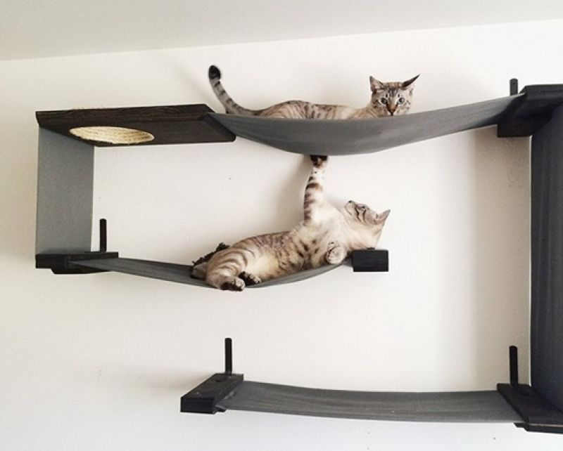 Get a piece of nature to your home with a wooden cat tree and help them feel home.