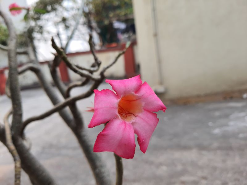 Samsung Galaxy Note 10 Lite camera samples
