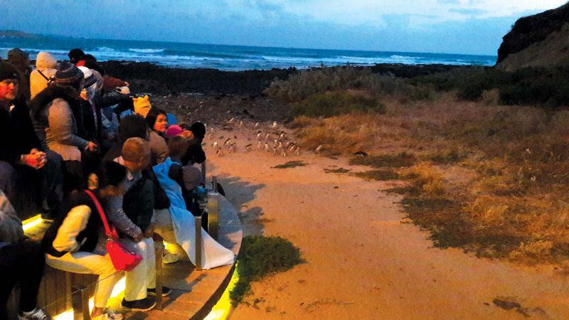Waiting for the Little Penguins to return on Phillip Island