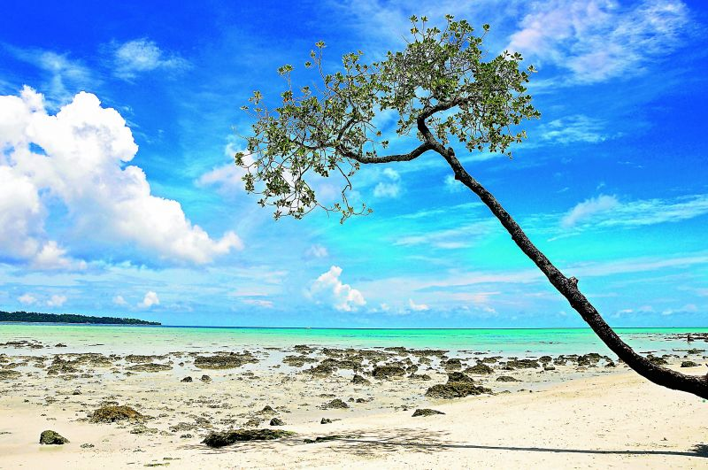 Havelock's most enduring lone tree on the beach.