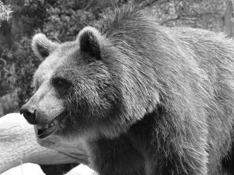 Kelly Ann Walls was mauled to death by her pet black bear