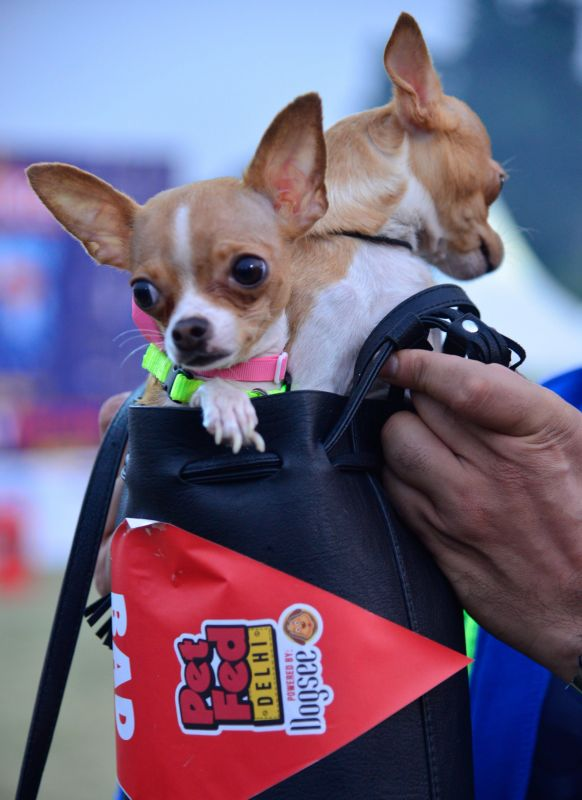 More than 50 different breeds of dogs can be seen at the festival.