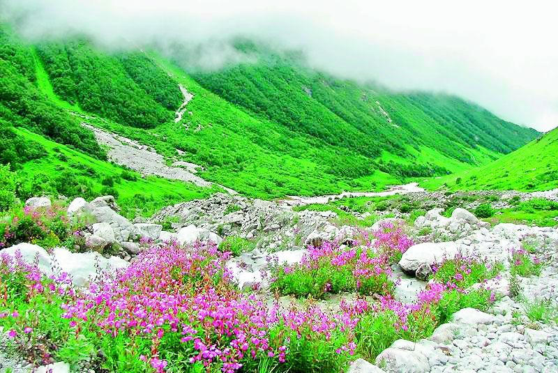 The Valley of Flowers in Uttarakhand