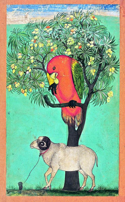 Breathtaking artefacts: A unique painting from the Deccan's Golconda school of a parrot perched on a mango tree, with a ram tethered below