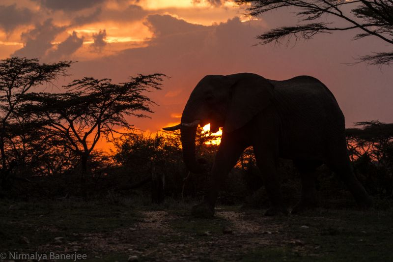 Elephant silhouetted by the setting sun. Photo taken from within Porini Cheetah Camp