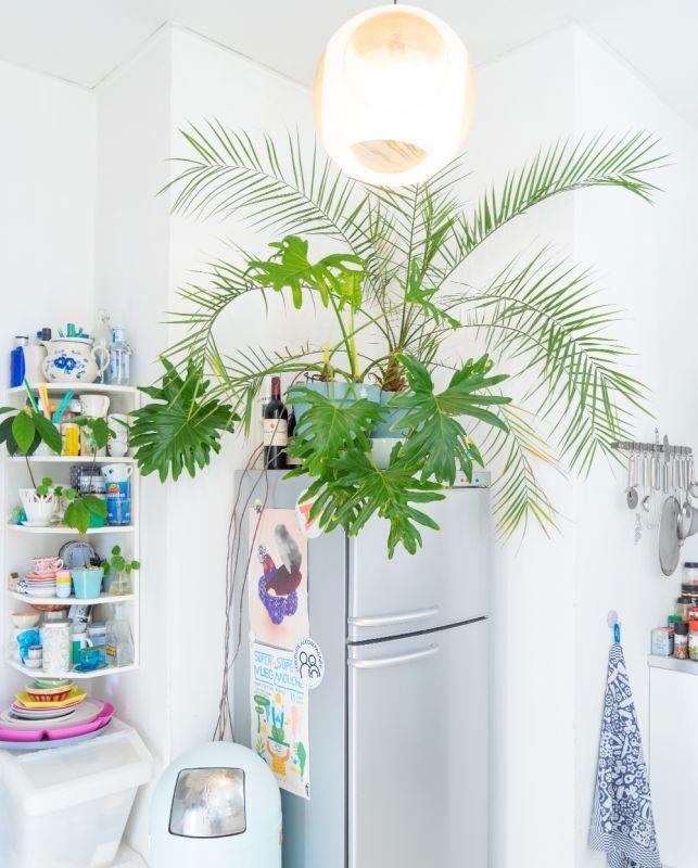Beginner's guide to indoor plants