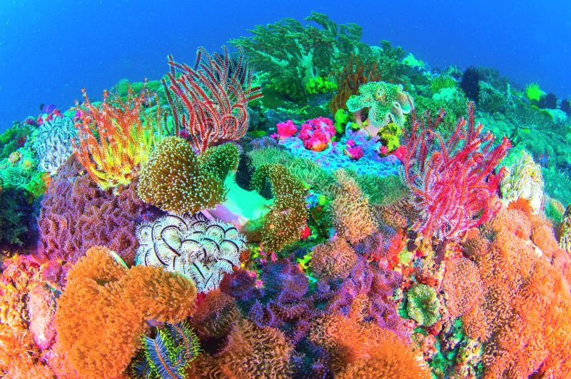 Coral reef off Philippines.