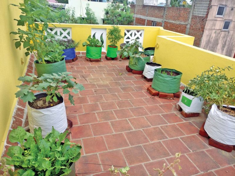 Archana Stalin and her terrace garden (Photo: DC)