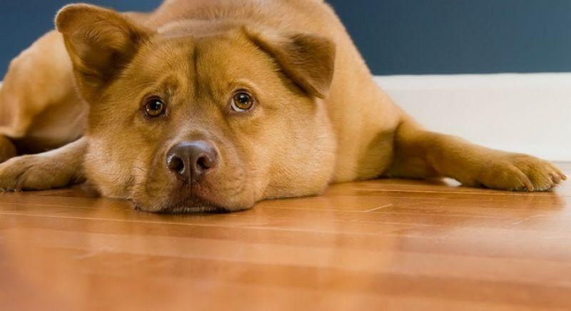 Choose hardwood floorings like mahogany and oak.