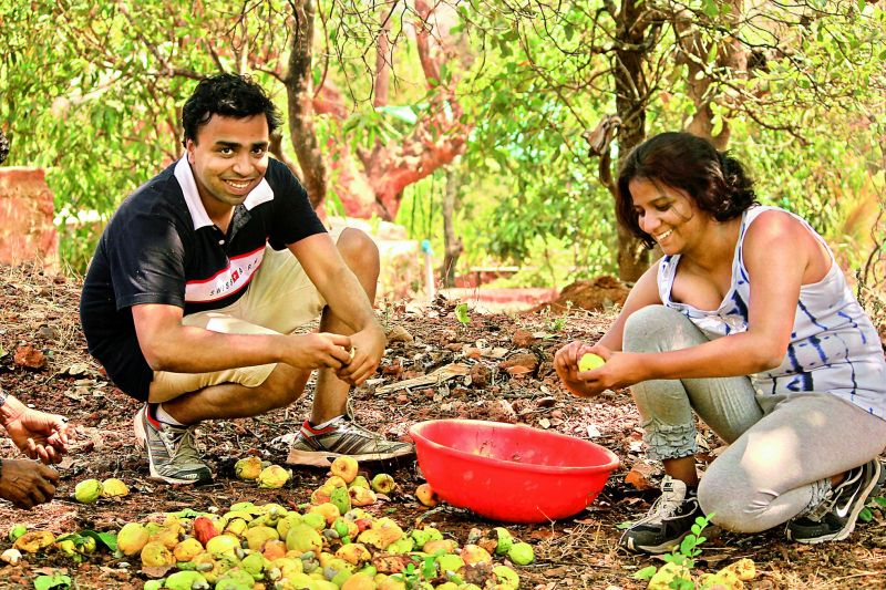 Travellers collect mangoes on the Farm of Happiness.