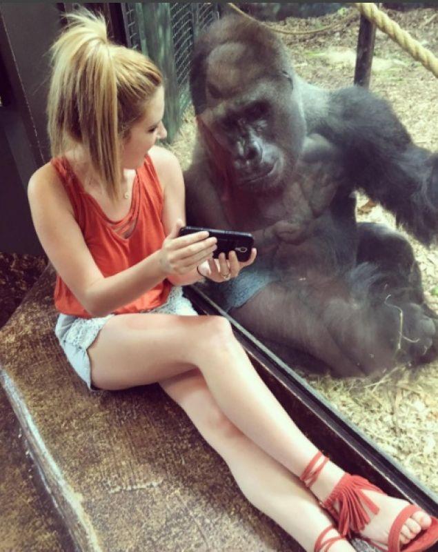 Photo of Lindsay with the gorilla at Louisiana zoo