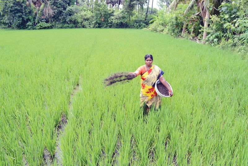A woman sprays natural fertlizer in the field.
