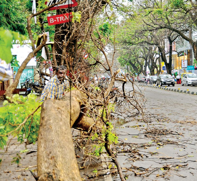 Trees and branches fell in Basavanagudi, HSR Layout, Vyalikaval, Nagarabhavi, Kadugodi, Bommanahalli, Singasandra and other areas.