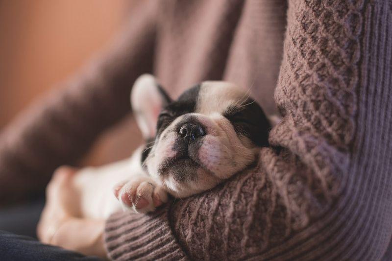 Adorable sleeping puppy (Photo: Pixabay)